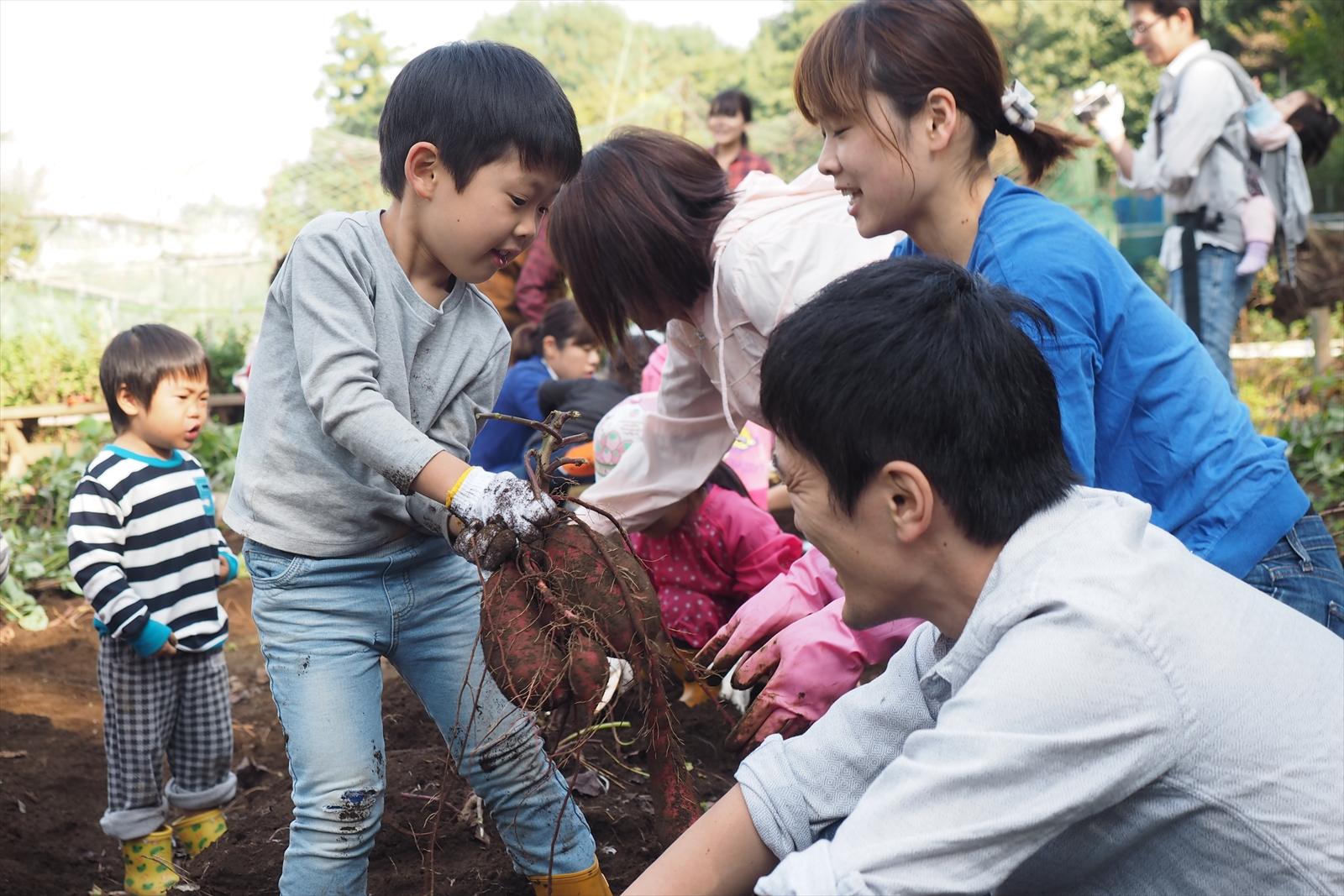 サツマイモ掘り体験会(松並菜園俱楽部)